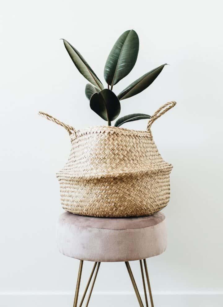 minimalist planter on a stool