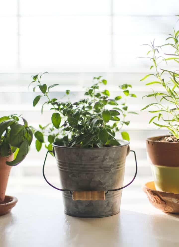 gardening in early retirement
