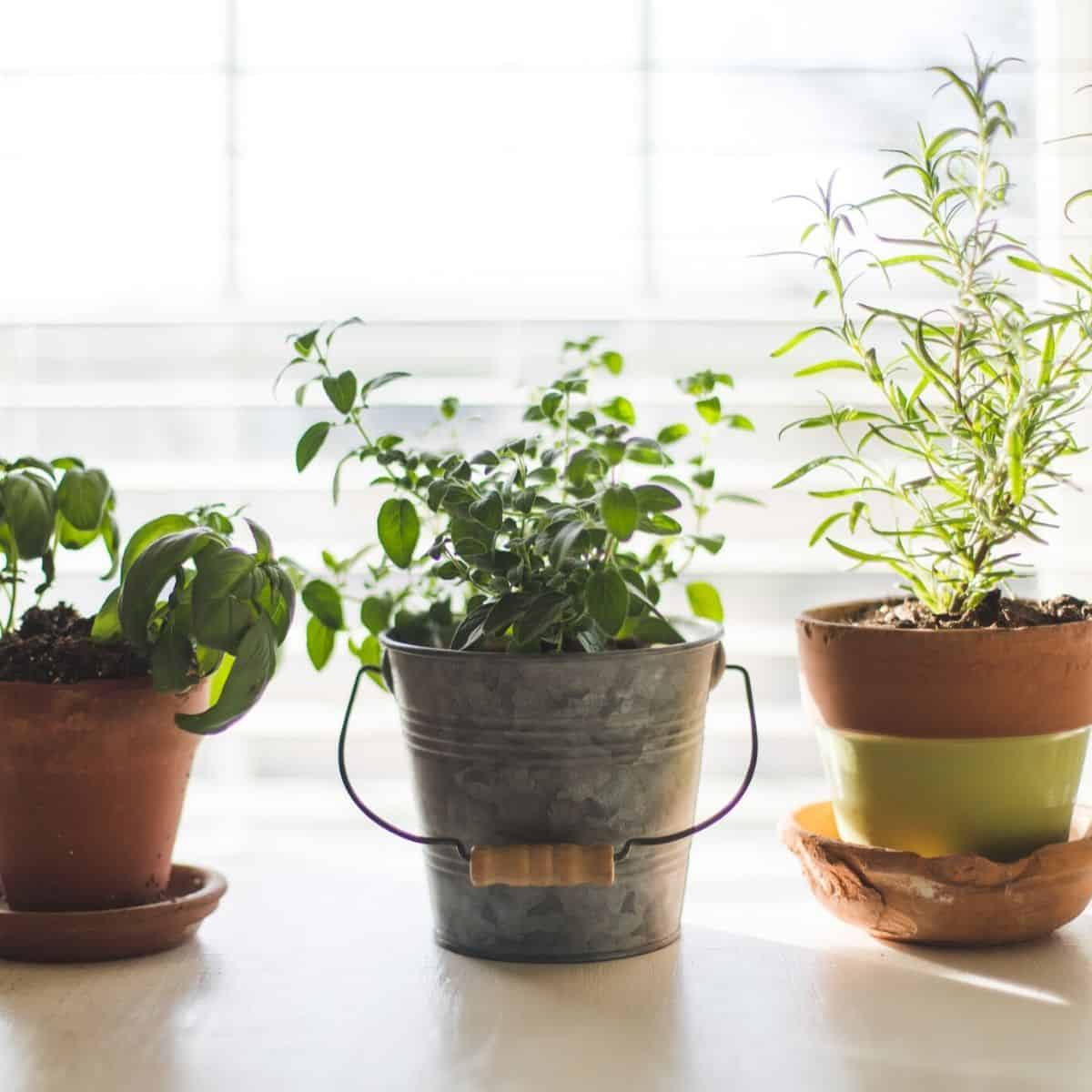 gardening  while being financially independent retired early
